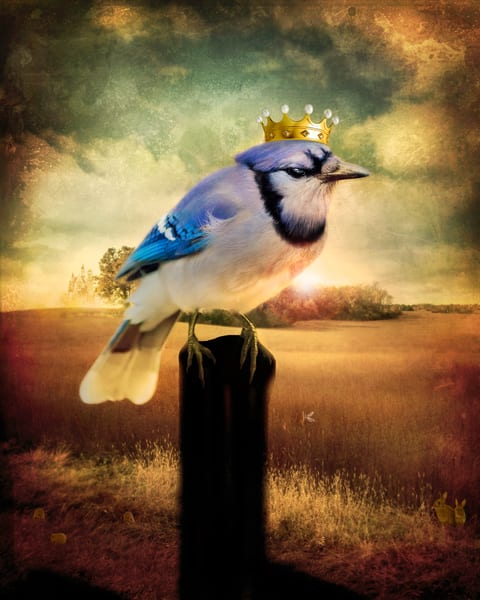 Blue Jay with Crown