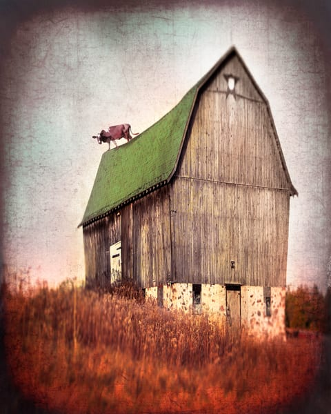 Cow on Barn Roof