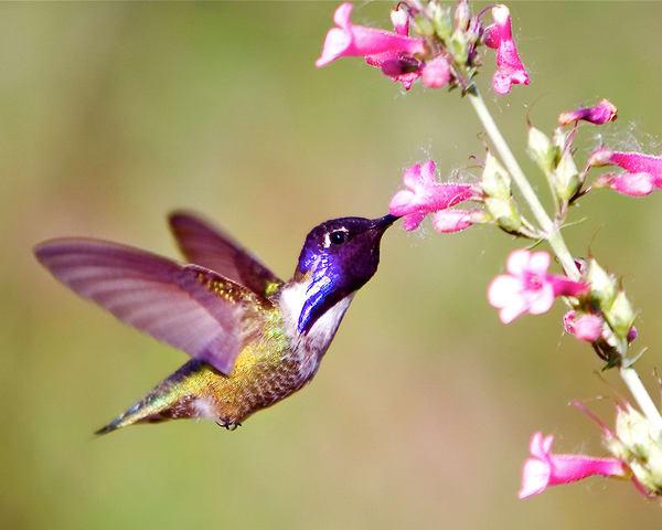 mg-0014-1 Hummingbird