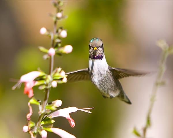 mg-4408-1 Hummingbird