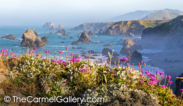 Kortum Bloom, Sonoma Coast
