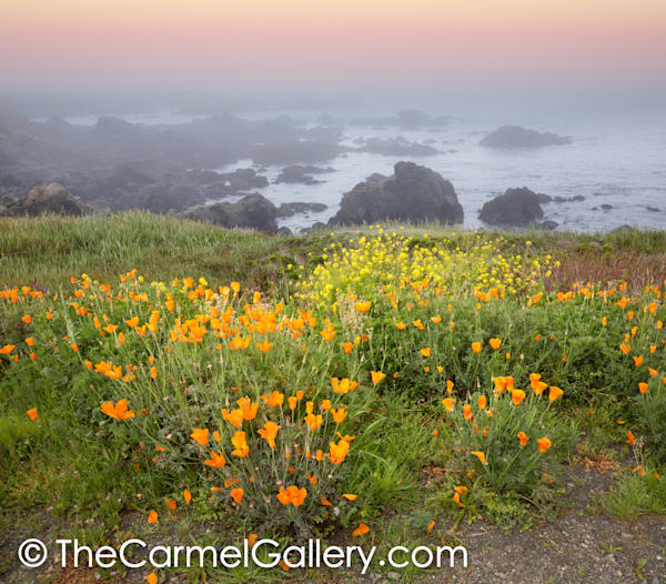 Poppies & Mustard, California Coast Art | The Carmel Gallery