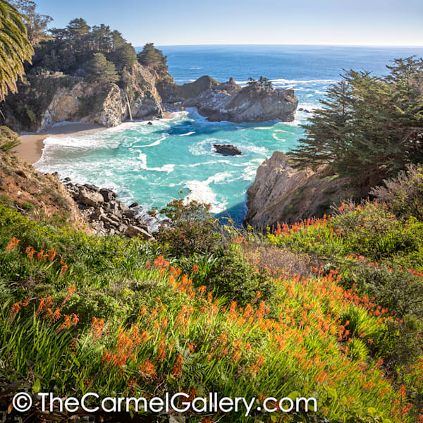 February Bloom Mc Way Falls Art | The Carmel Gallery