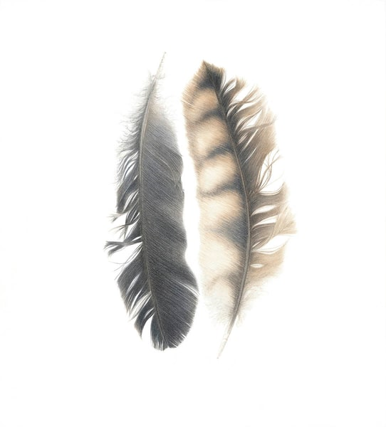 Owl And Crow Feathers