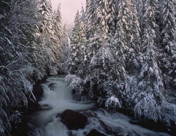 Scenic Wallace Falls surrounded by a snow covered forest