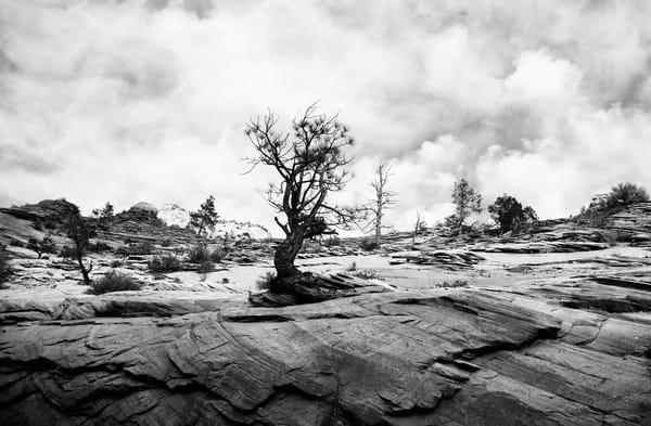 zion-tree