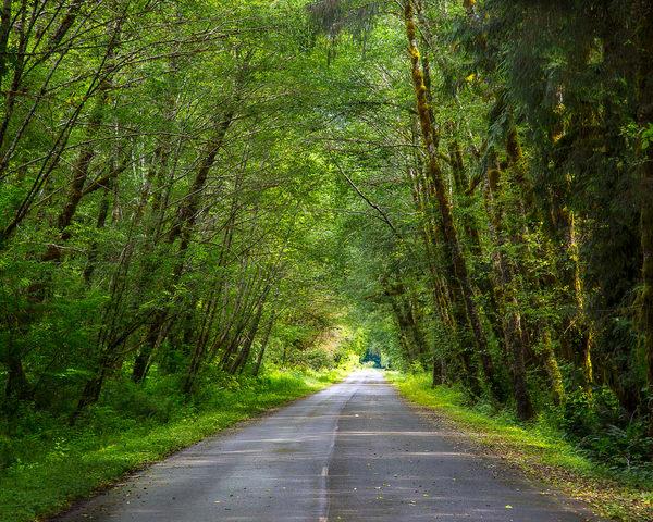 yoh-rainoforest-road