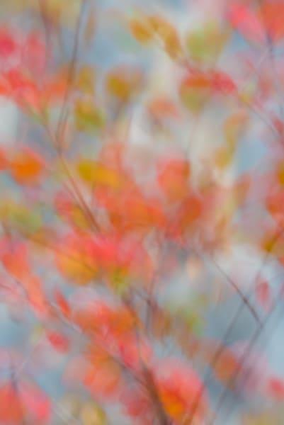 Fall Mosaic Art | Nelson Fine Art Printing