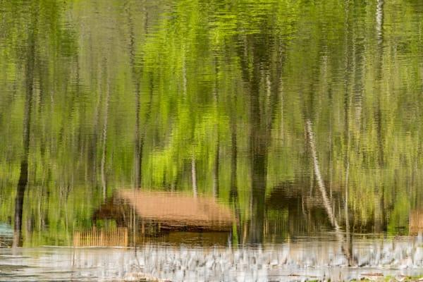 Reflections On Living Art | Nelson Fine Art Printing