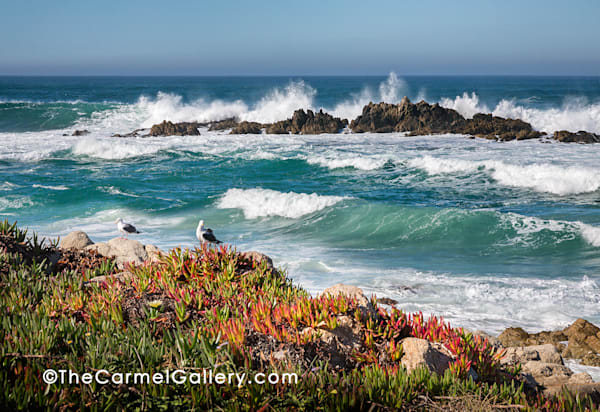 Restless Sea Carmel