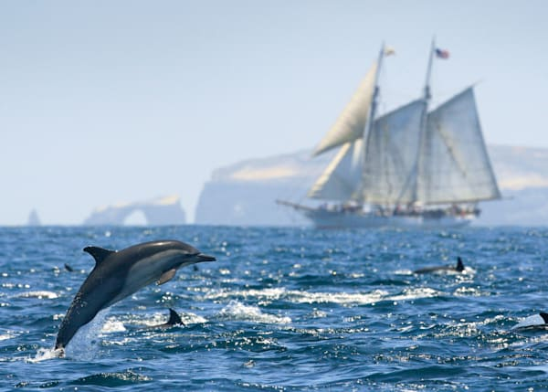 Dolphin with Tall Ship