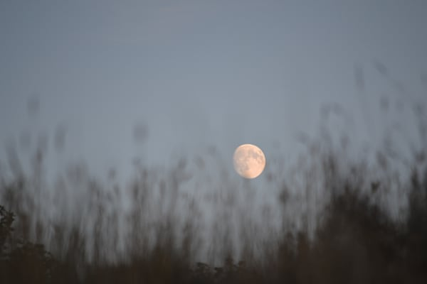 Photograph of a rising moon for sale as Fine Art
