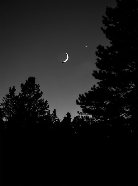 Crescent Moon and Trees, Colorado - bw
