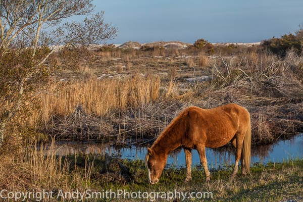 Grazing Near the Beach fine art photograph