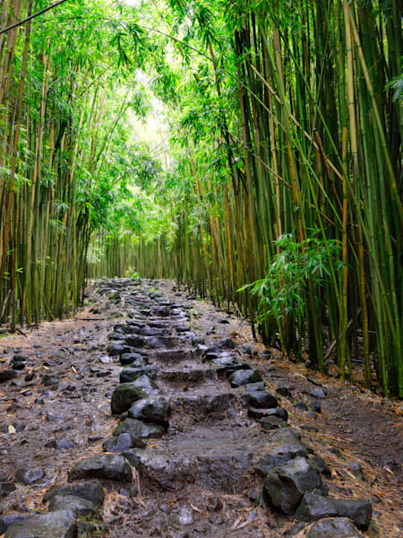 """""""Bamboo Forest"""", Maui"""