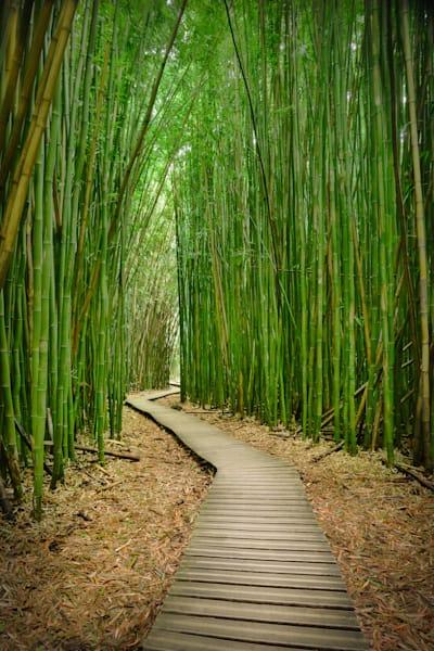 """""""Zen Pathway"""", Maui"""