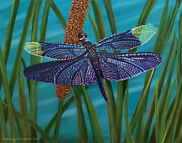 Dragonfly Art | Vasquez Art