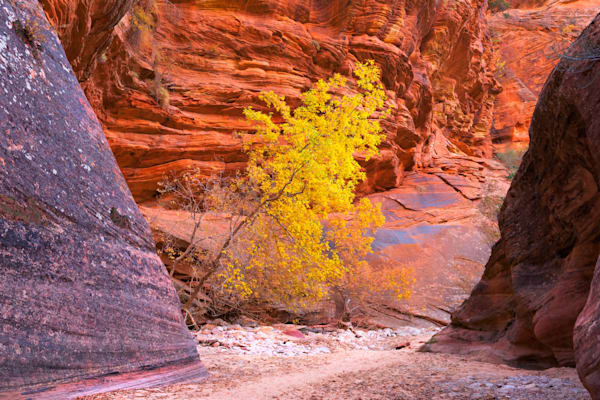 The Light Of The Canyon Art | Nelson Fine Art Printing