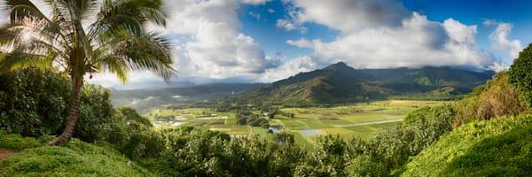 """Kauai Taro Fields"""