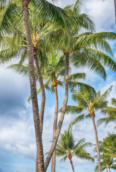 """Tropical Palms"""