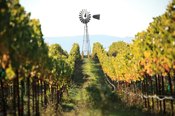 """Windmill Vineyard"""