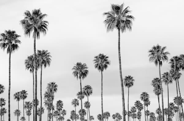 """""""B&W Palms"""""""