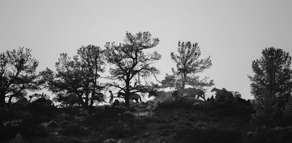 Black and White Fine Art Western Photographs for Sale | Wapiti Wildscapes