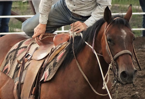 Photograph of a tie-down roper getting back in the saddle for sale as Fine Art