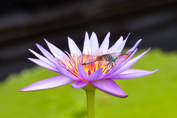 Flower Wall Art: Dragonfly On Guard