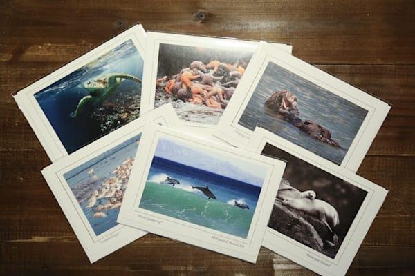 """Marine Life"" - Notecard Set"