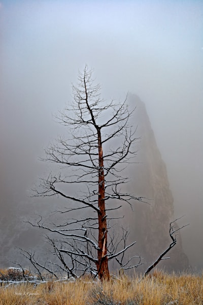 Winter Fog (141044NWND8) Photograph for Sale as Fine Art Print