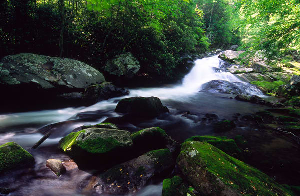 Lynn Camp Prong Falls