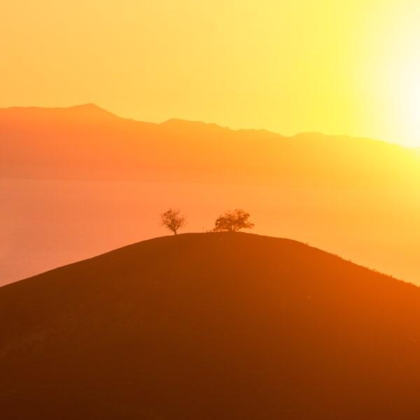 Two Trees Golden Sunset
