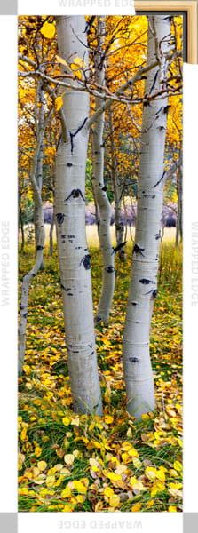 Yosemite East (151336LNND8) Aspen Trees Photograph for Sale as Fine Art Canvas Print