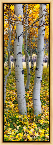 Yosemite East (151336LNND8) Aspen Trees by Steve J. Giardini