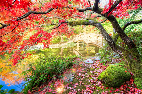 Autumn Leaves Photograph for Sale as Fine Art.