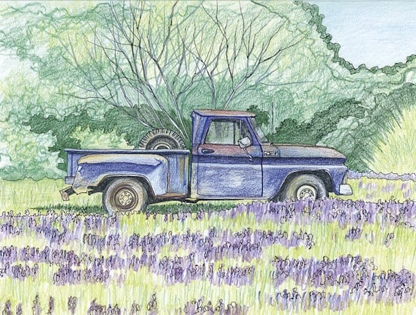 Truck In Field Of Blue Bonnets, East Texas