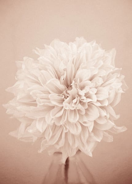 """""""Lovely Petals"""" - Pink Monochrome"""