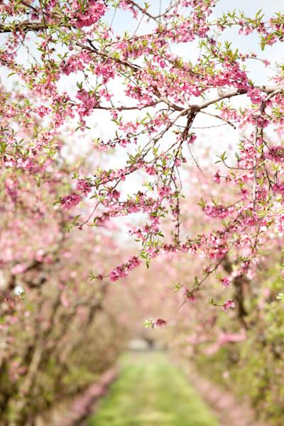 """""""Spring Blossoms 2"""""""