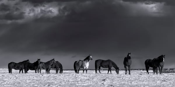 Horses Winter Range . Canadian Rockies|Rocky Mountains| Banff National Park|