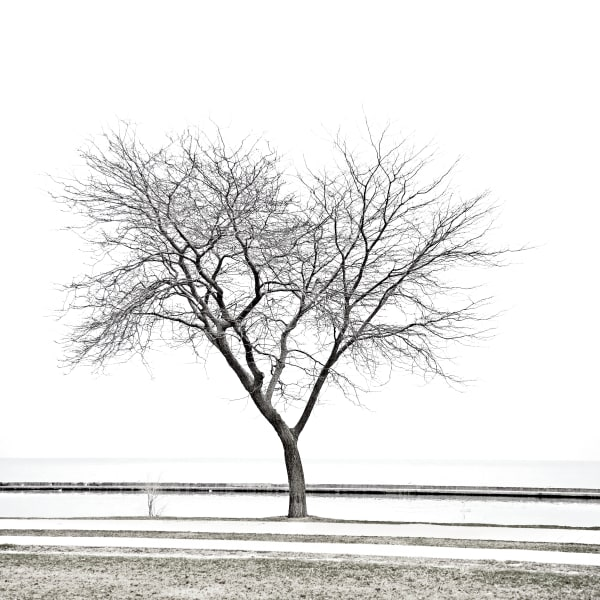 Shop for Branches Photographic Art | Decor for your space