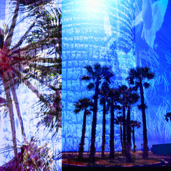 Collage - Palm Trees - Long Beach