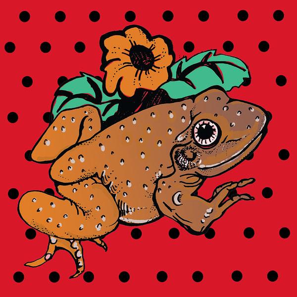 Polka-dot Frog
