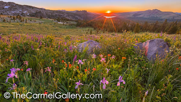 Wildflower Panorama Art | The Carmel Gallery