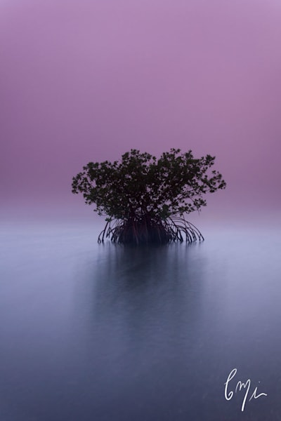 Surreal Mangrove