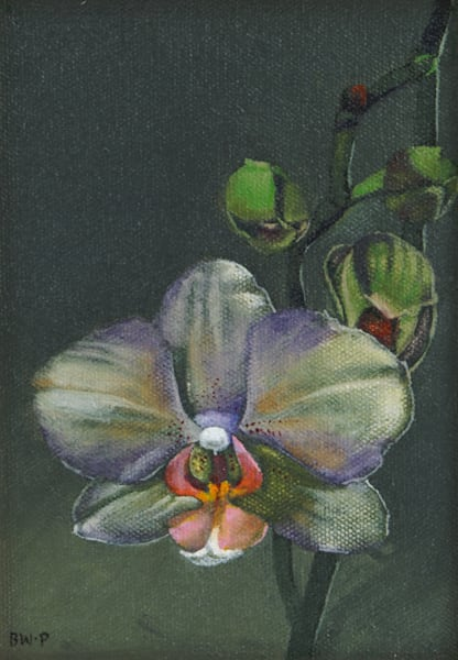 Orchid by Barbara Waterman-Peters