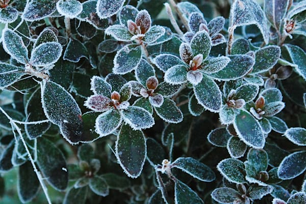 """""""First Frost"""""""
