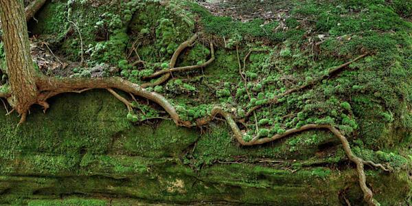 4169 Roots Hocking Hills, Ohio Art | Cunningham Gallery
