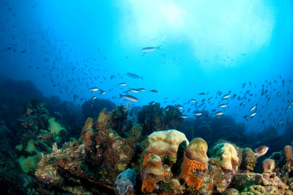 Underwater coral reef photograph