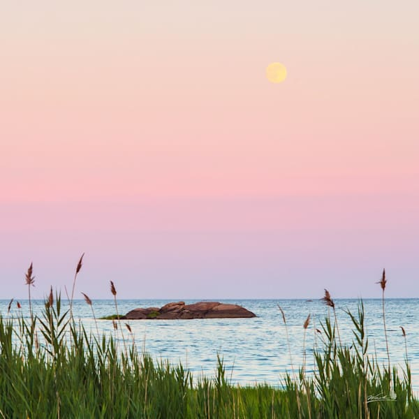 The super moon rises above Long Island Sound at Chaffinch Island.